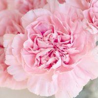 風水色:ピンクの意味・方角