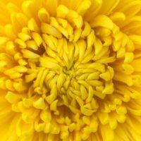 風水色:黄色の意味・方角