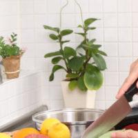 【キッチン風水】水と火を取り持つ観葉植物を活用する