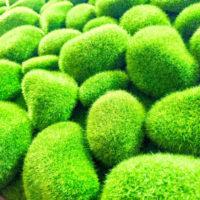 室内緑化計画始動!ホンモノより本物っぽいフラワーとグリーンの部屋