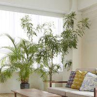 風水的な観葉植物の種類・方角別の置き場所とは?