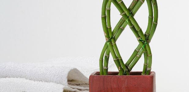 【寝室風水】寝室に最適な観葉植物とは?その使い方 - 運びを ...
