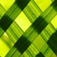 インテリアコーディネートに緑を取り入れた部屋の実例